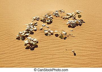 Sand Dune Plant On Beach