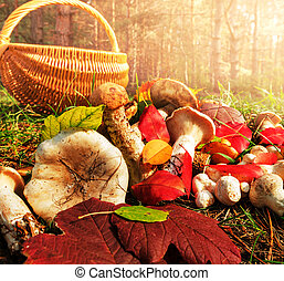 Mushroom - mushrooms in fall season