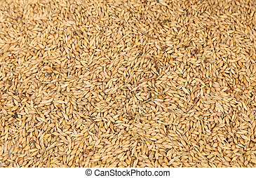 Background of wheat grain.