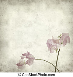 textured old paper background with sweet pea flowers