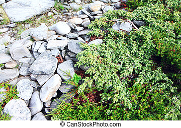 Stones and moss in Lapland - Stones and green moss in...
