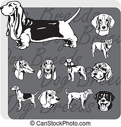 cão, Raças, -, vetorial, jogo