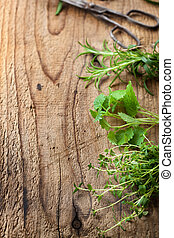 fresh herbs on wooden background