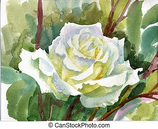 Watercolor Flower: white rose - Watercolor Flower...