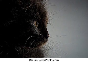 Kitten - Cute black kitten on black background