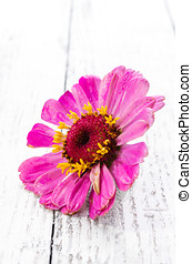 Wildflower over wooden background