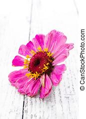 Wildflower over wooden background