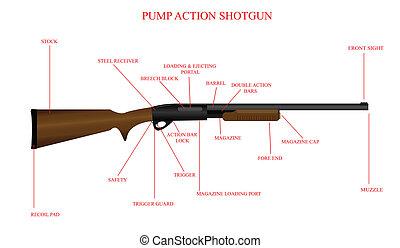 Labeled Shotgun Diagram - Labeled illustration of a pump...