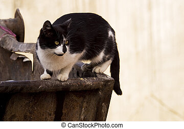 Cat on trash receptacle