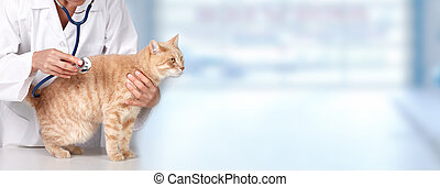 Ginger cat with veterinarian doctor. - Red cat with...