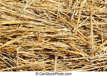 Close up hay straw stack texture, agriculture background