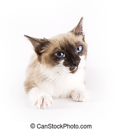 Cat - Cute cat on white background
