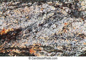 lichen - Background with the image of lichen