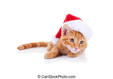 Christmas Santa Cat - Christmas kitten wearing santa hat on...