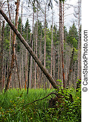 bog - Landscape with the image of bog