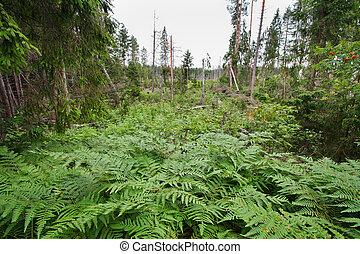 bog - Landscape with the image of bog and fern under the...