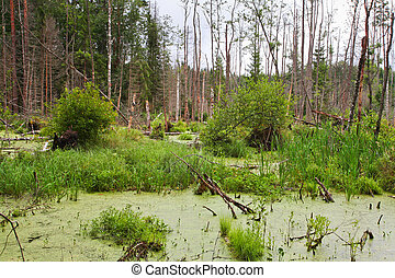 bog - Landscape with the image of bog