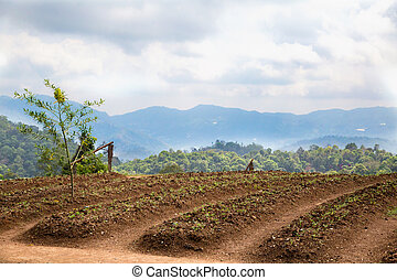 Planting fields in North Thailand. Near Chiang Mai