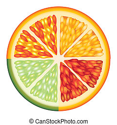 citrus fruit over white background vector illustration
