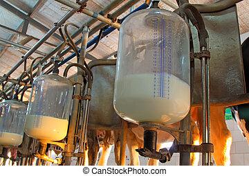 glass milk storage tank in a milking workshop, luannan...