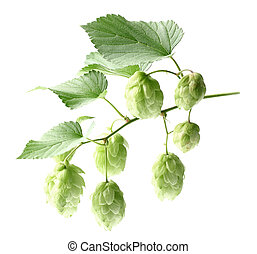 Hop with leaves
