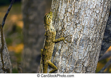 Etude in Brown Shades Lizard on Tree, Binh Thuan province of...