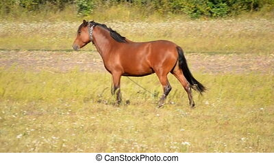 Horse in a pasture field - horse