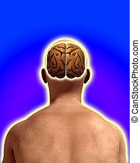 Brain In Male Head