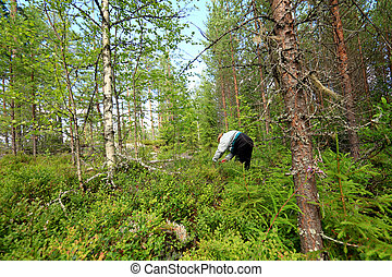 woman in forrest - Adult woman picking blue berries in the...