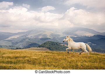 White horse in a beautiful landscape