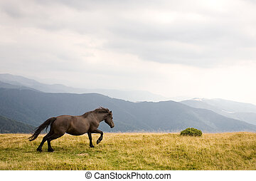 Stallion running on a meadow