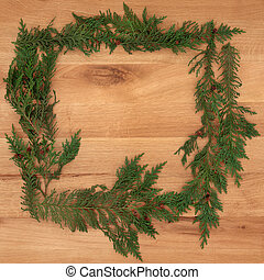 Cedar Cypress Border on Oak - Cedar cypress leaf background...