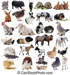 農場, 動物