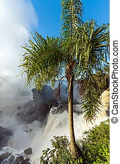 Palm tree and waterfall - A palm tree with the Iguazu falls...