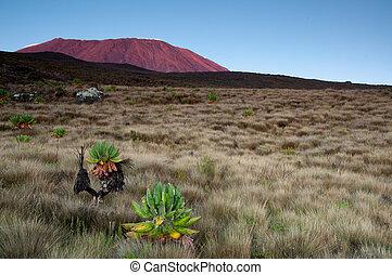Sunrising on Kilimanjaro - View of sunrise on Kilimanjaro...