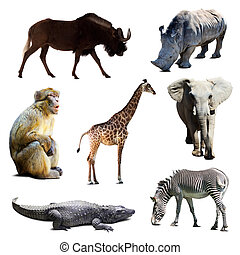 Set of african animals over white background