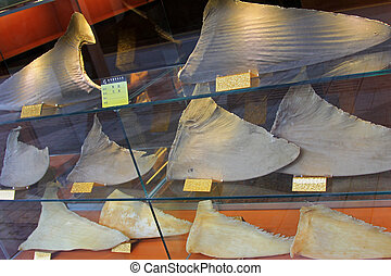 Dried Shark fins at the traditional Chinese dried seafood...