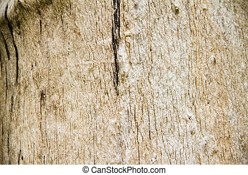 Close Up Surface of Dead wood,