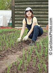 mujer, trabajando, campo, cebolla