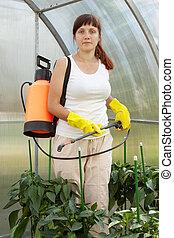 Female gardener spraying pepper  plant