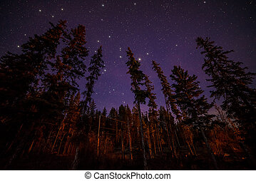 Tops of Evergreen Trees at Night With Stars