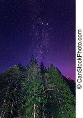 Lit Trees with Milky Way - Milky Way in purple sky with lit...