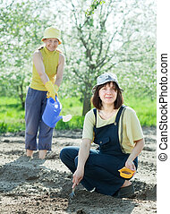 women sows seeds in bed at field