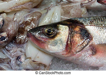 European Seabass Dicentrarchus labrax for sale