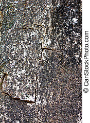 texture shot of tree bark
