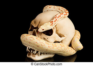 Skull and snake at haloween - Skull and snake on a black...