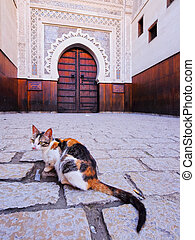 Cat in Fes, Morocco - Cat in front of a typical moroccan...