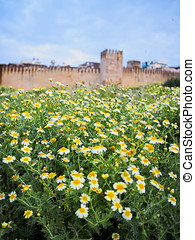 Walls of Fes, Morocco - Flowers in front of the walls of the...