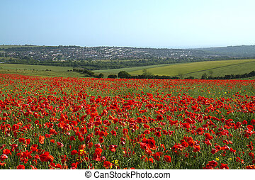 Poppy Field and Brighton - Field of Poppies on Ditchling...