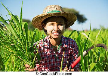 traditionelle, asiatisch, landwirt